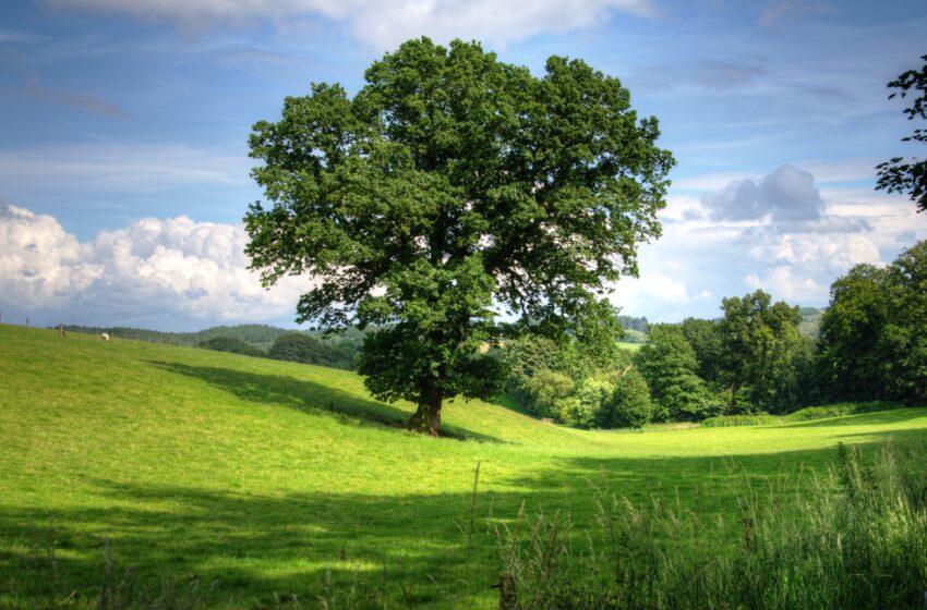 Vezua, dall'e-commerce alla forestazione