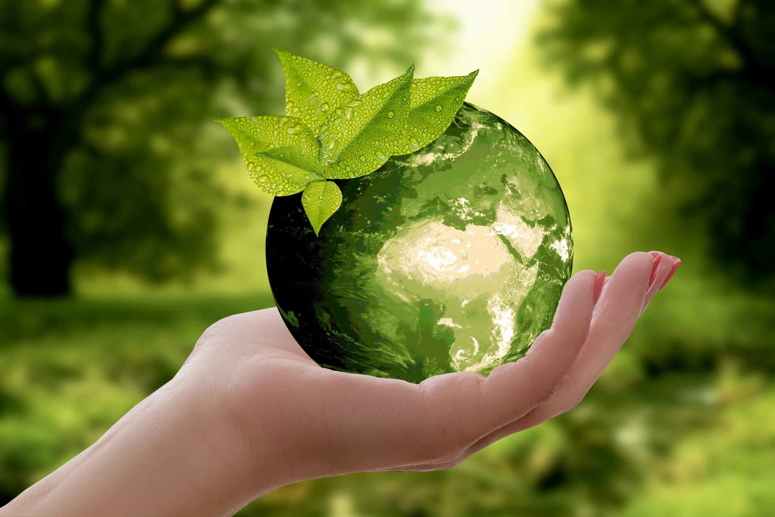 Sostenibilità ambientale: la svolta delle aziende