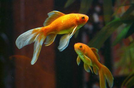 Dalle pinne dei pesci idee per innovare